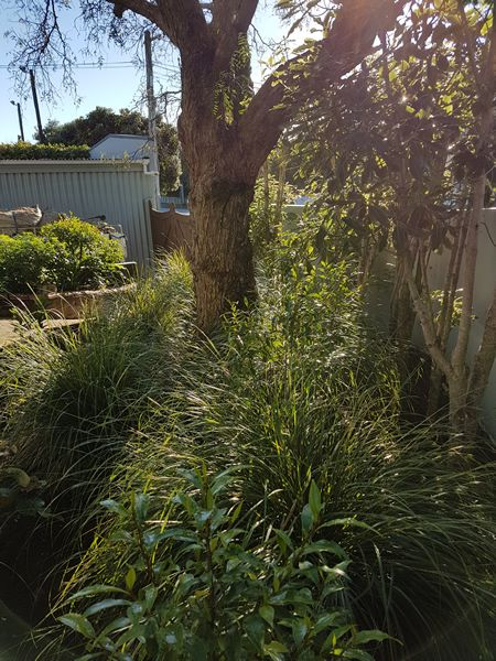 Planting-Raumati